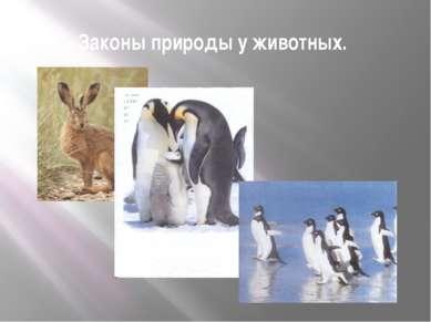 Законы природы у животных.
