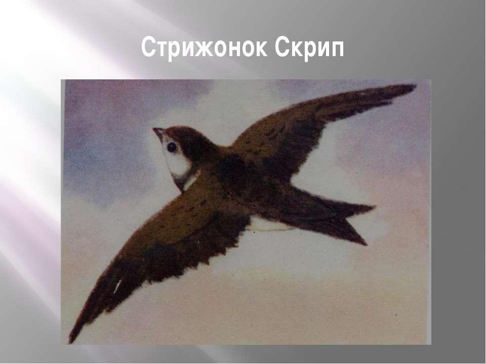 Стрижонок Скрип