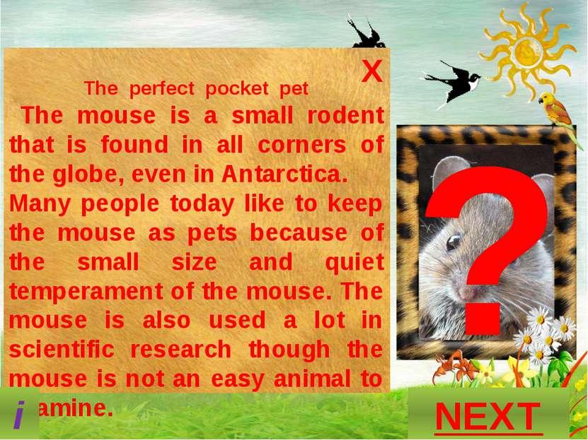 ? What is this animal? GUESS? P A N D A NEXT S N A K E O T T E R M O U S E i ...