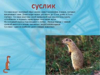 Суслики ведут наземный образ жизни; живут колониями, в норах, которые выкапыв...