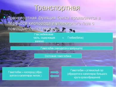Транспортная Транспортная функция белка проявляется в переносe кислорода и уг...