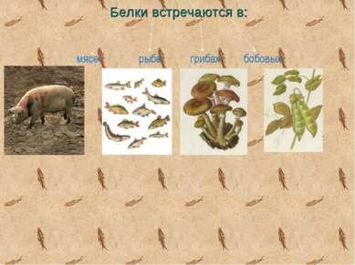 Белки встречаются в: мясе рыбе грибах бобовых