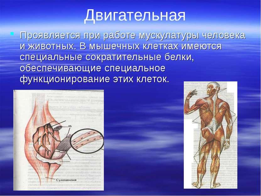 Двигательная Проявляется при работе мускулатуры человека и животных. В мышечн...