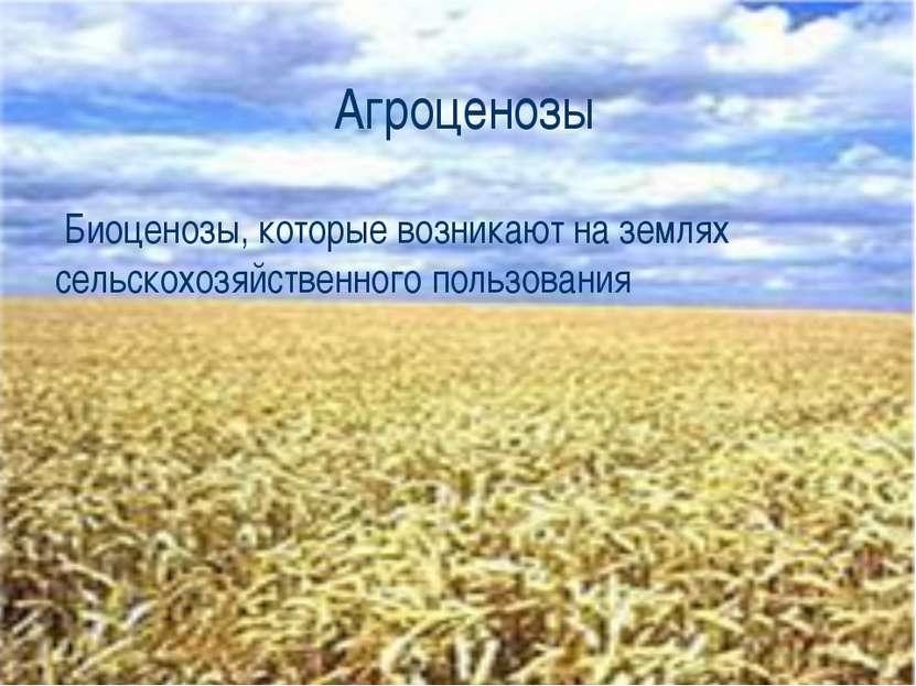 Агроценозы Биоценозы, которые возникают на землях сельскохозяйственного польз...
