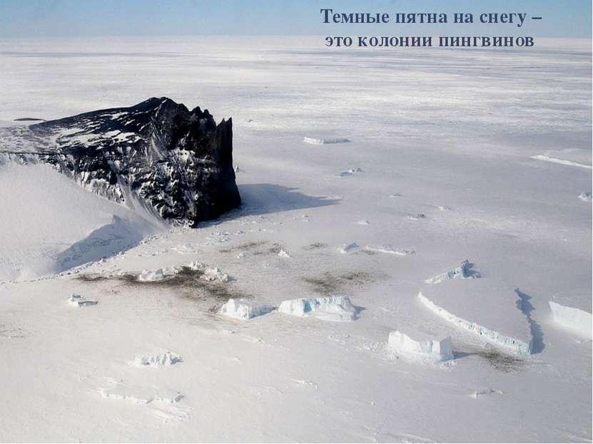 Темные пятна на снегу – это колонии пингвинов