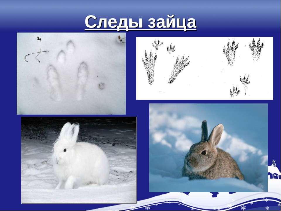 Следы зайца