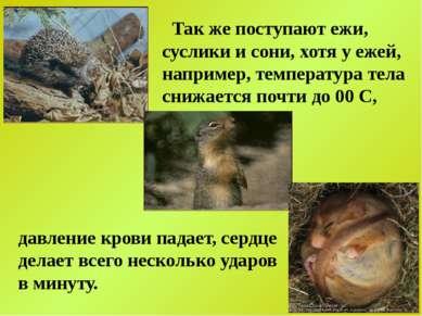 Так же поступают ежи, суслики и сони, хотя у ежей, например, температура тела...