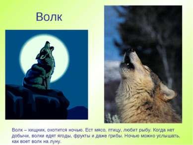 Волк Волк – хищник, охотится ночью. Ест мясо, птицу, любит рыбу. Когда нет до...