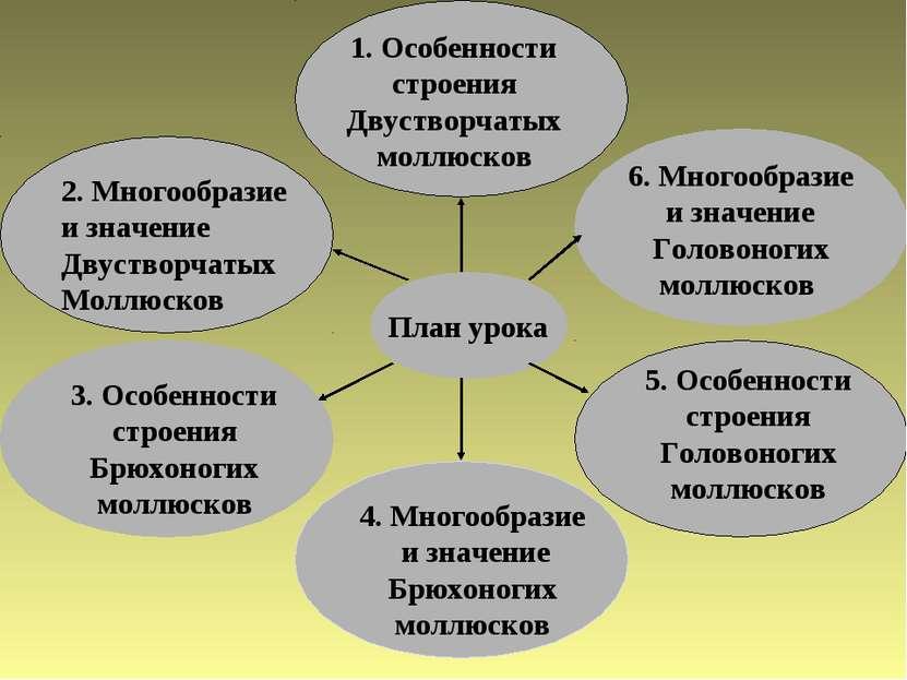 План урока 1. Особенности строения Двустворчатых моллюсков 3. Особенности стр...