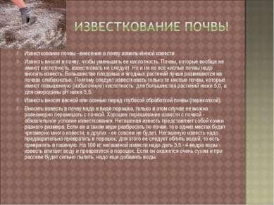 Известкование почвы –внесение в почву измельчённой извести Известь вносят в п...