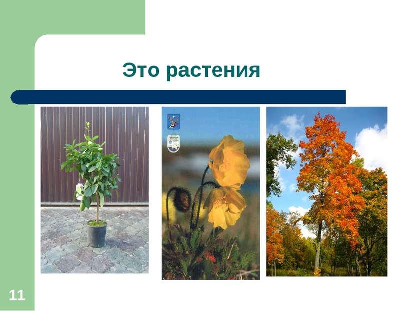 * Это растения