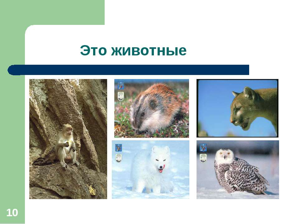 * Это животные