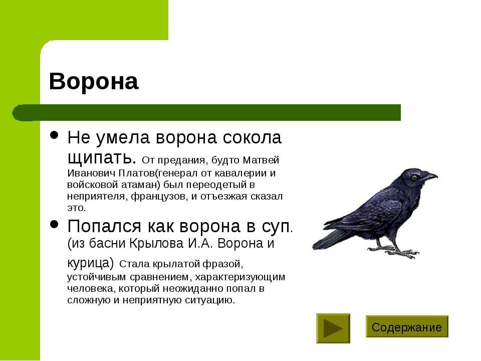 Ворона Не умела ворона сокола щипать. От предания, будто Матвей Иванович Плат...
