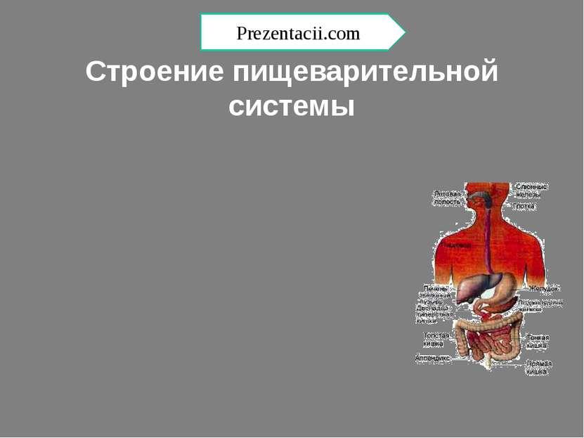 Строение пищеварительной системы Prezentacii.com