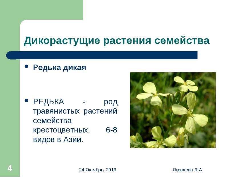 * Яковлева Л.А. * Дикорастущие растения семейства Редька дикая РЕДЬКА - род т...