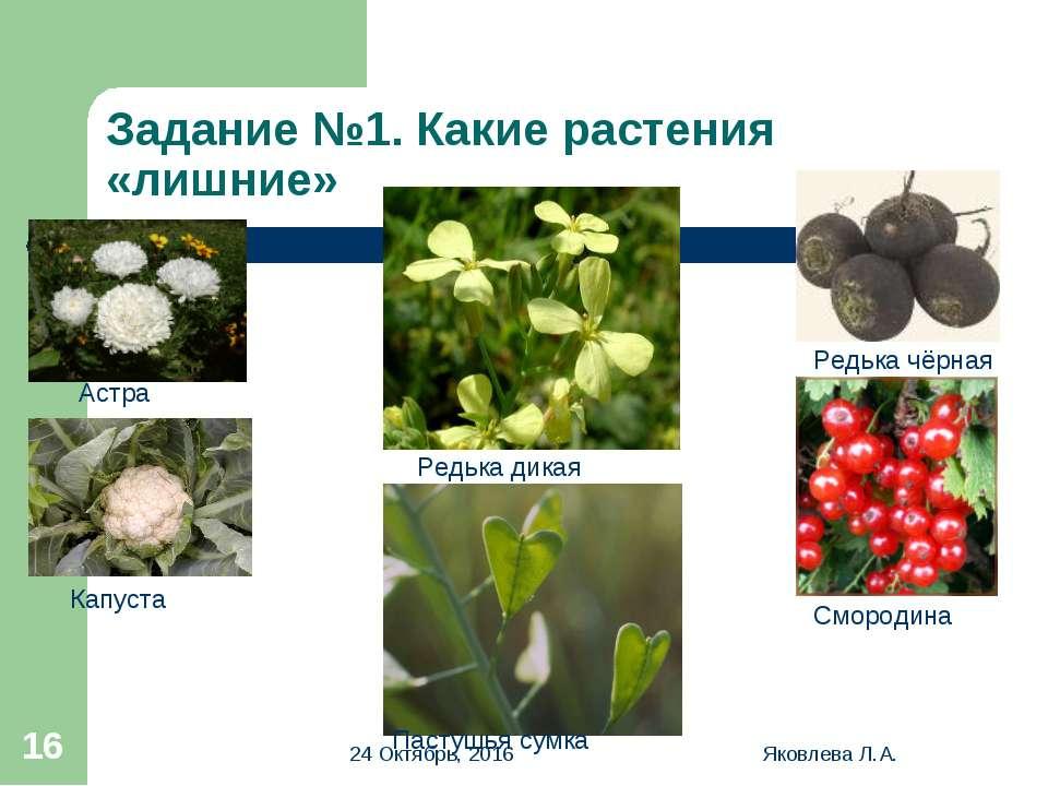 * Яковлева Л.А. * Задание №1. Какие растения «лишние» Редька чёрная Астра Кап...
