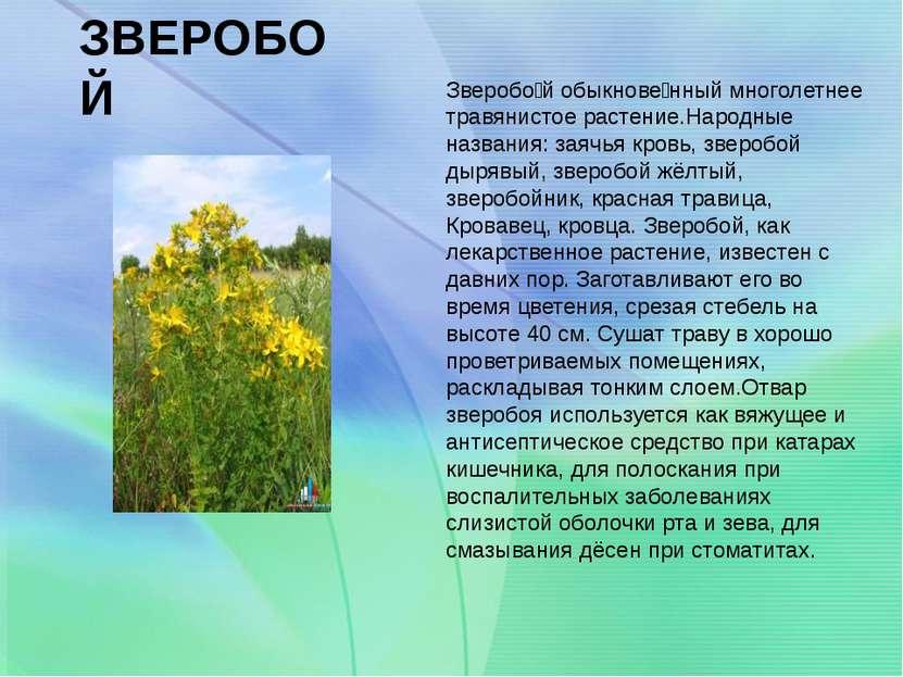 ЗВЕРОБОЙ Зверобо й обыкнове нный многолетнее травянистое растение.Народные на...