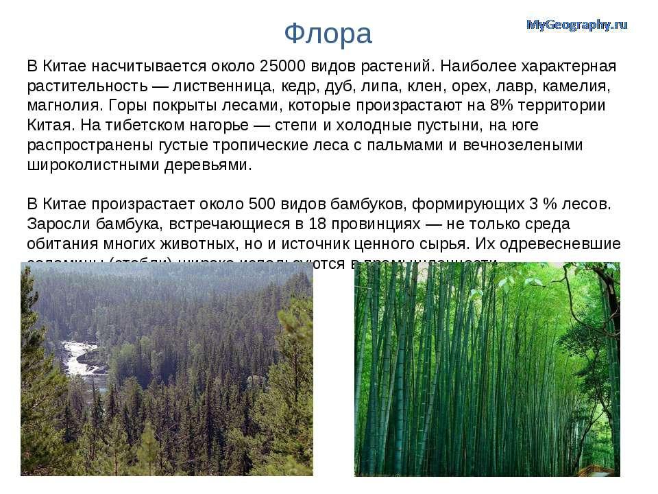 Флора В Китае насчитывается около 25000 видов растений. Наиболее характерная ...