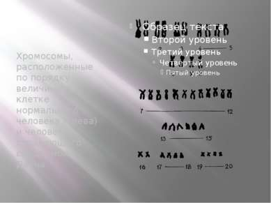 Хромосомы, расположенные по порядку величины, в клетке нормального человека (...
