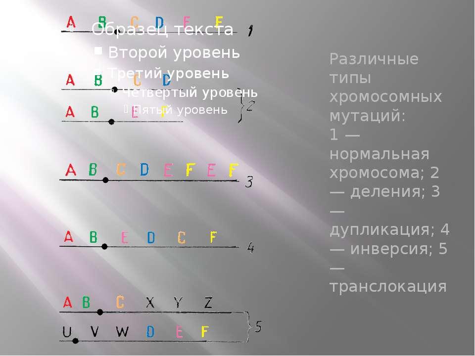Различные типы хромосомных мутаций: 1 — нормальная хромосома; 2 — деления; 3 ...