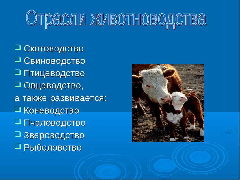 Скотоводство Свиноводство Птицеводство Овцеводство, а также развивается: Коне...