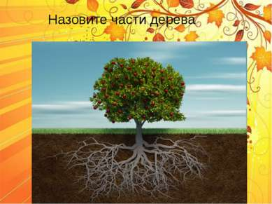 Назовите части дерева