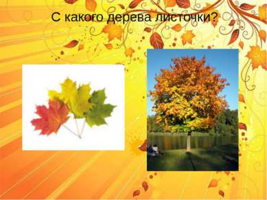 С какого дерева листочки?