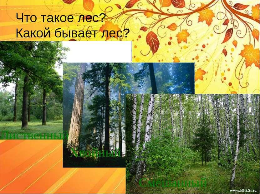 Что такое лес? Какой бывает лес? Лиственный Хвойный Смешанный