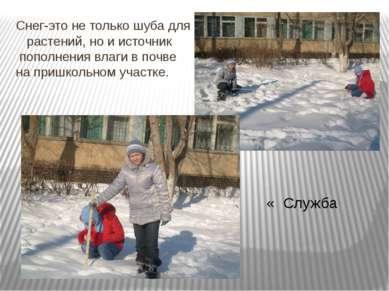 Снег-это не только шуба для растений, но и источник пополнения влаги в почве ...