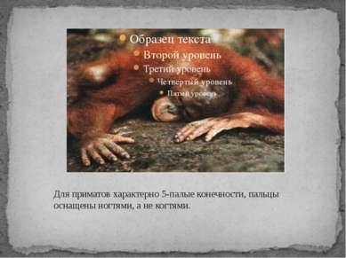 Для приматов характерно 5-палые конечности, пальцы оснащены ногтями, а не ког...