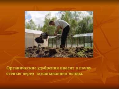 Органические удобрения вносят в почву осенью перед вскапыванием почвы.