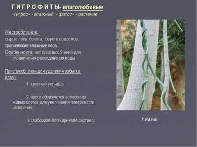 Г И Г Р О Ф И Т Ы- влаголюбивые «гигрос» - влажный, «фитос» - растение Местоо...