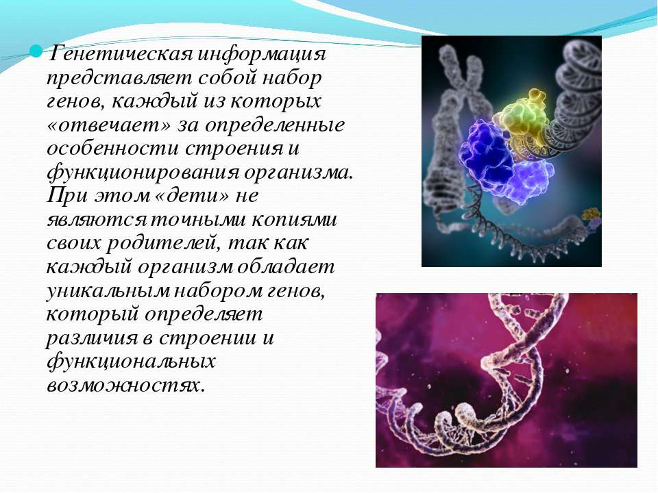 Генетическая информация представляет собой набор генов, каждый из которых «от...