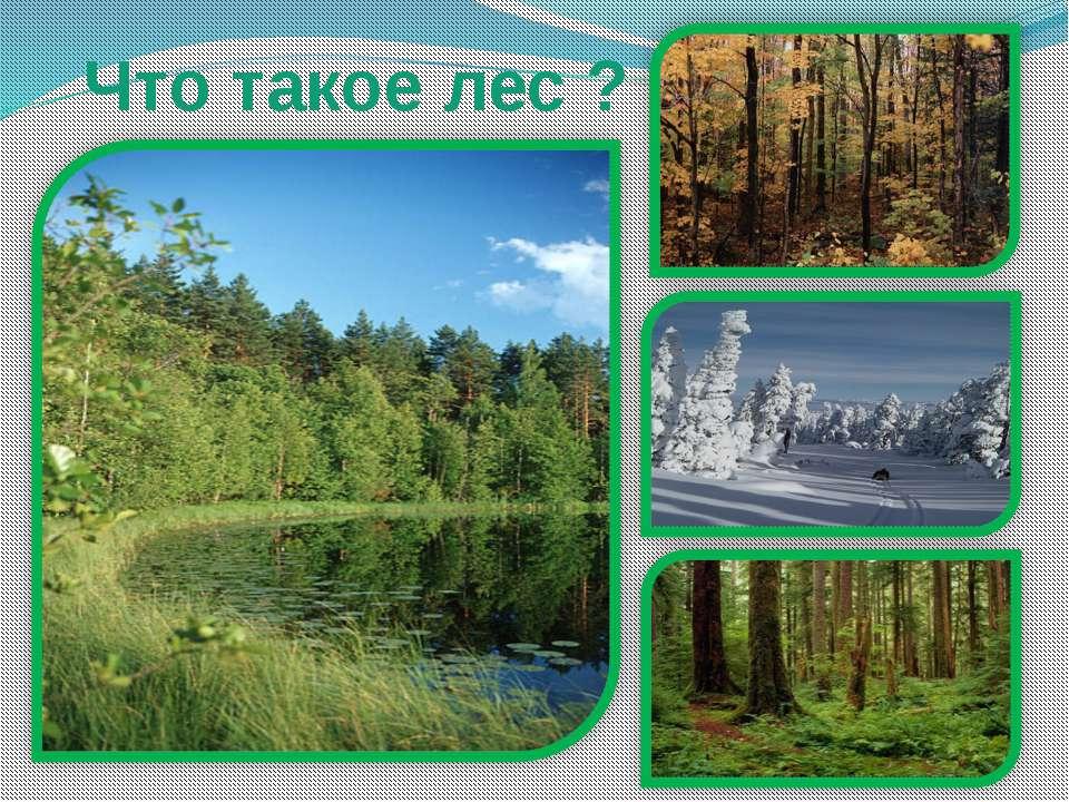 Что такое лес ?