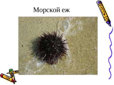 Морской еж