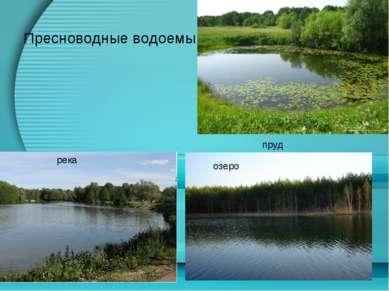 Пресноводные водоемы пруд река озеро