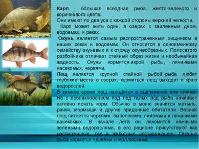 Карп - большая всеядная рыба, желто-зеленого и коричневогоцвета. Они имеют п...