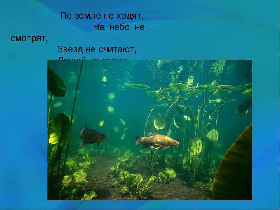 По земле не ходят, На небо не смотрят, Звёзд не считают, Людей не знают.