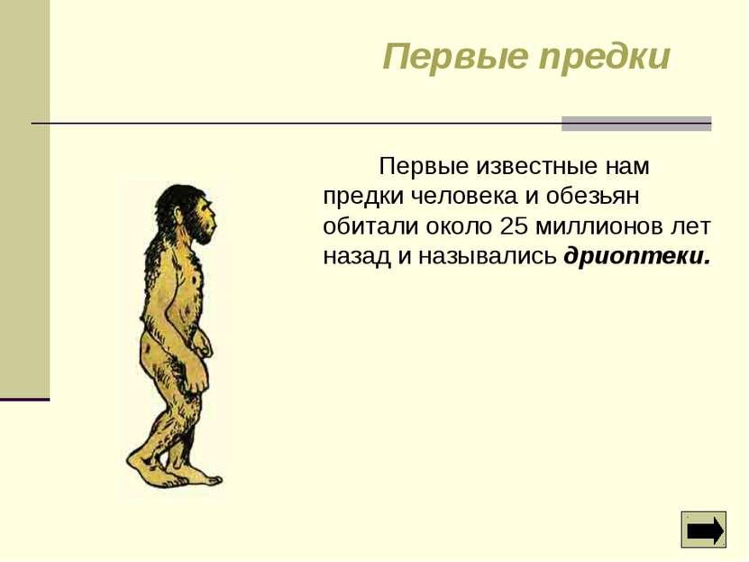 Первые известные нам предки человека и обезьян обитали около 25 миллионов лет...
