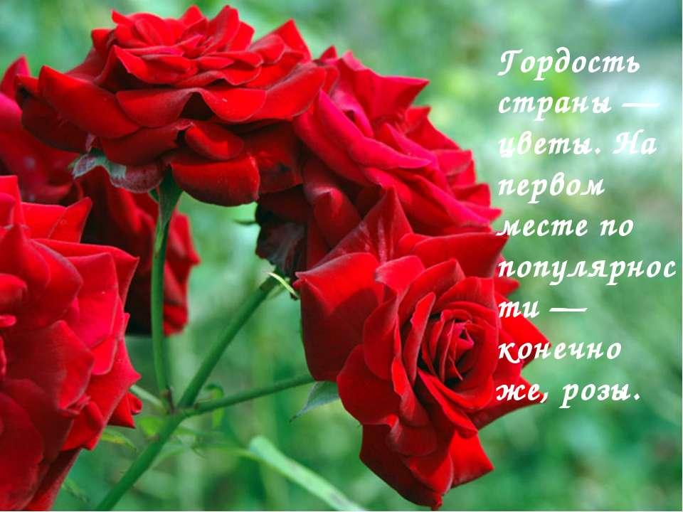 Гордость страны — цветы. На первом месте по популярности — конечно же, розы.