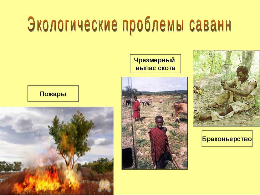 Браконьерство Чрезмерный выпас скота Пожары