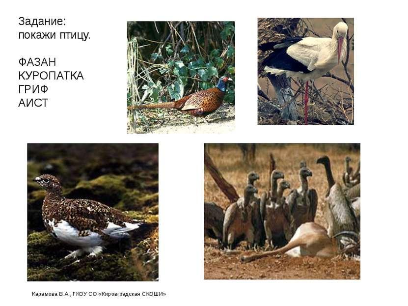 Задание: покажи птицу. ФАЗАН КУРОПАТКА ГРИФ АИСТ Карамова В.А., ГКОУ СО «Киро...