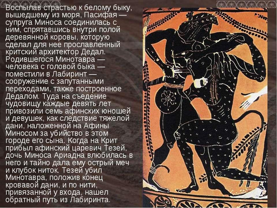 Воспылав страстью к белому быку, вышедшему из моря, Пасифая — супруга Миноса ...