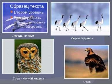 Лиса на охоте Главным образом барсуки обитают в лесах Евразии. Большеглазый д...