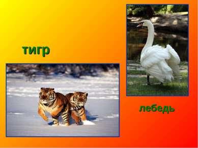 тигр лебедь