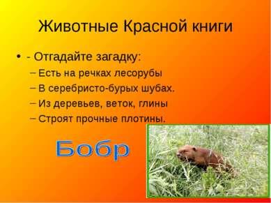 Животные Красной книги - Отгадайте загадку: Есть на речках лесорубы В серебри...