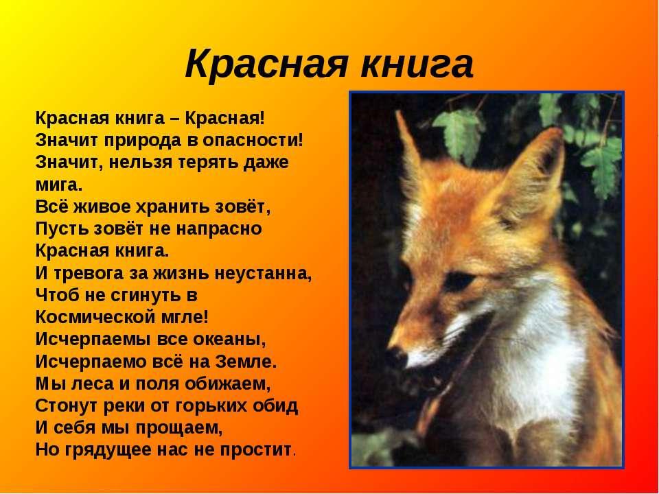 книга россии реферат класс Красная книга россии реферат 3 класс