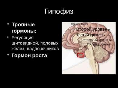 Гипофиз Тропные гормоны: Регуляция щитовидной, половых желез, надпочечников Г...