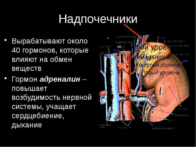 Надпочечники Вырабатывают около 40 гормонов, которые влияют на обмен веществ ...