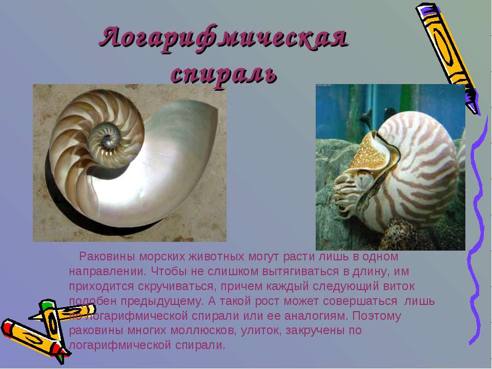Логарифмическая спираль Раковины морских животных могут расти лишь в одном на...